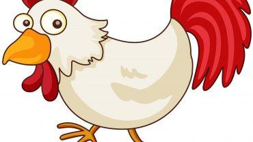 chicken, food